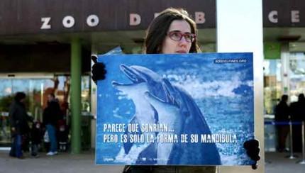 salvar, delfines, zoo, aquarium