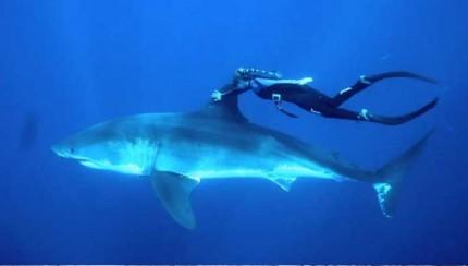 Tiburón, submarinista, bucear