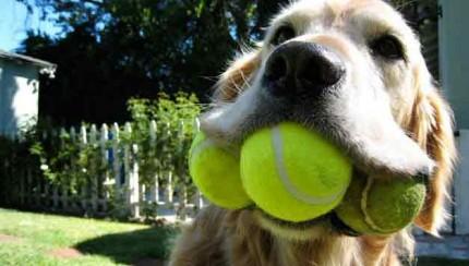 El-perro-y-sus-pelotas
