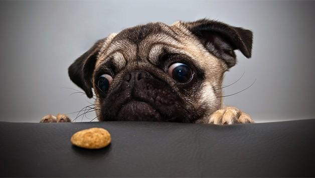 dieta perros