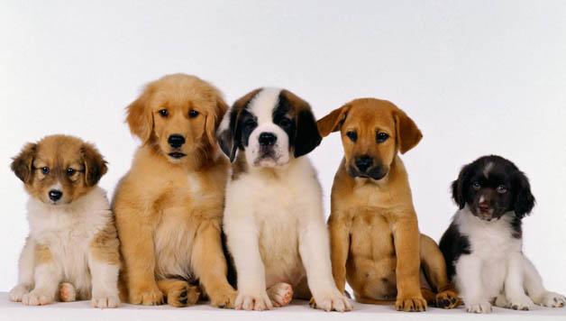 consejos cachorros