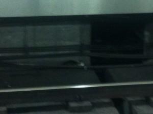 rescate de gato, metro madrid, ivan cortes, cadiz