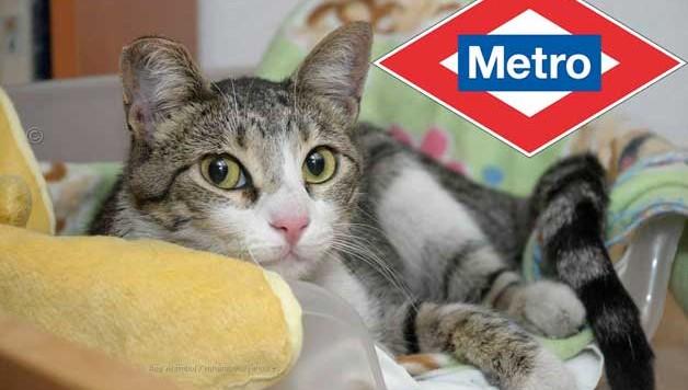 rescate-de-gato-metro-madrid-ivan-cortes