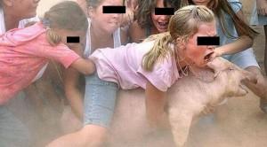 maltrato animal, festejos, cerdos, engrasados,