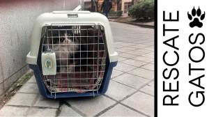 Rescate de gatos callejeros